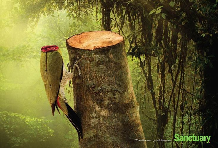 Sanctuary Asia – A shock campaign against the misdeeds of deforestation