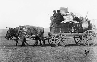 Pioneers with their oxen driven wagon, Moose Jaw, Saskatchewan, 1909