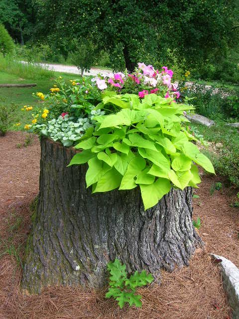 Tree Stump Decorating Ideas | ... stump -- tree struck by lightening years ago -- into a planter with
