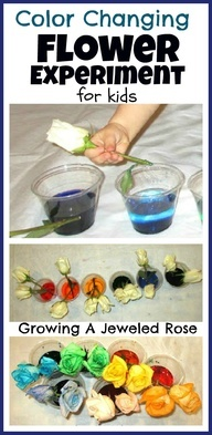 Infantil - Primavera. Color Changing Flower Experiment for Kids- fun Science! A similar project like this woneme 2nd place n the 6th grade science fair.