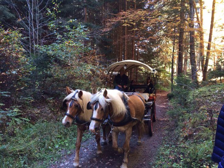 Horse riding Avelengo Winter Summer Boutique Hotel Merano Forest