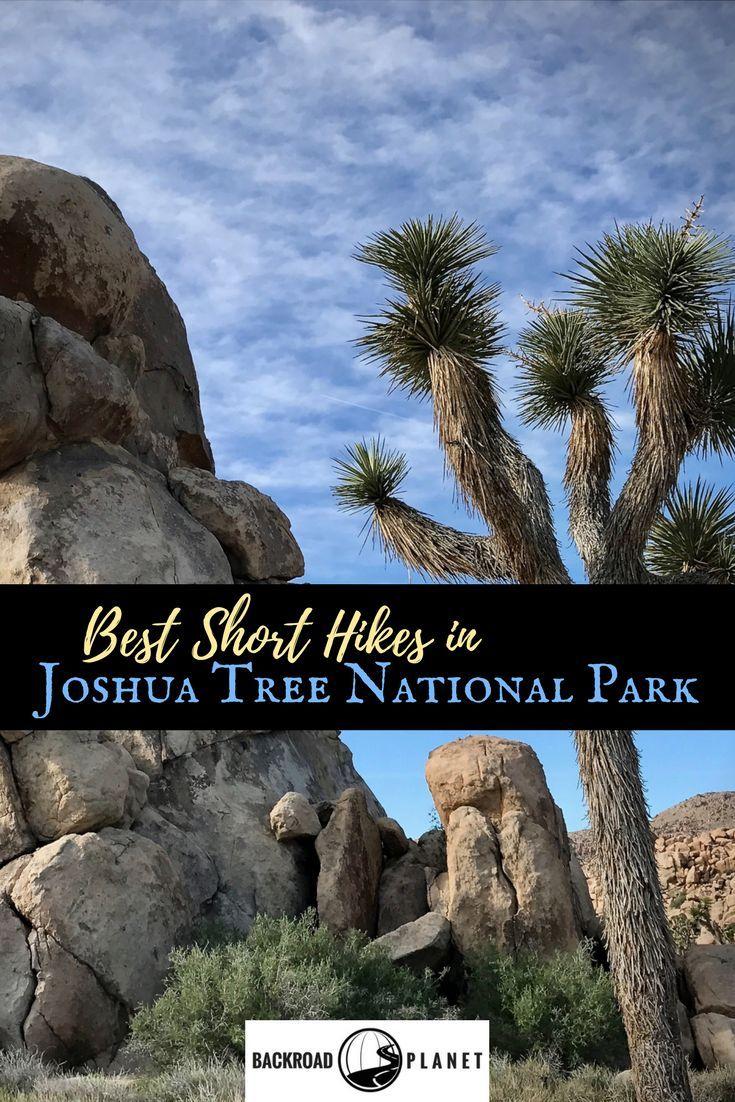 Best Short Hikes in Joshua Tree National Park, California