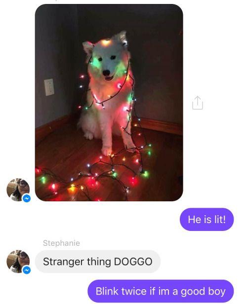 Doggo likes eggos. This dog and eleven should be best friends. #leggomyeggo
