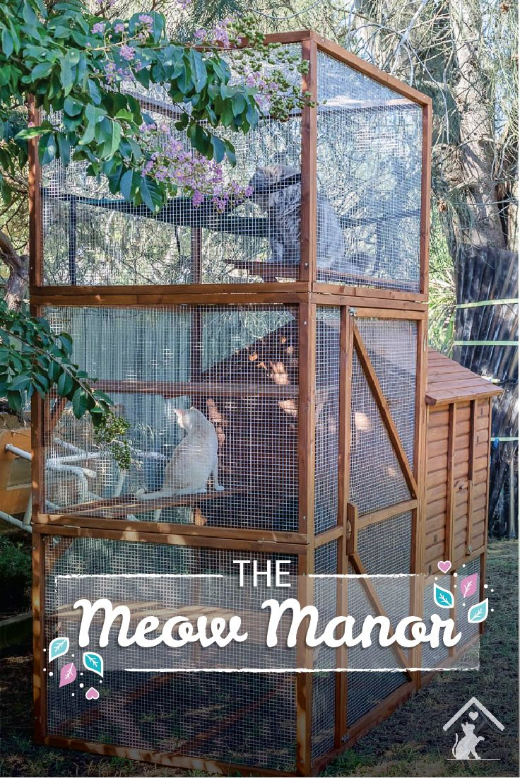 The Meow Manor is the perfect new home for your cat. Don't keep them cooped up indoors. Let them out to play safely outdoors in this safe and stylish enclosure. Click the image to find out more. #meowmanor #outdoorcatenclosures #backyardcatenclosures