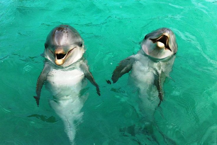 Beautiful Dolphins saying hello.