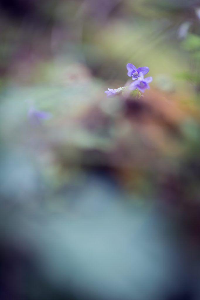 http://elodiefauvetphotographie.com/nature/florensis