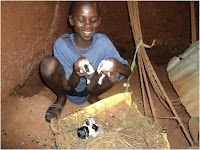 "Sengozi Moses, a Primary Seven student, opted for three rabbits which have delivered seven ""bunnies"" so far. Moses sees a large market for rabbits, and with a short gestation period, his supply will grow quickly and he will repay his loan in no time."