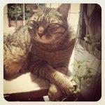#zampe incrociate.  www.amicidichicco.it #gatto #cat