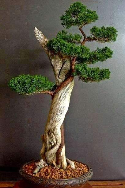 Beautiful Japanese Bonsai Tree
