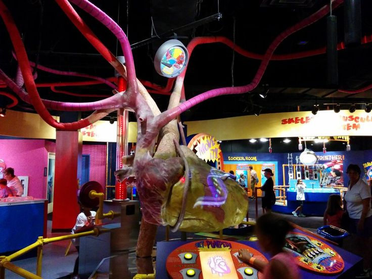 Adventure Science Center - Nashville, TN, United States. Inside your body
