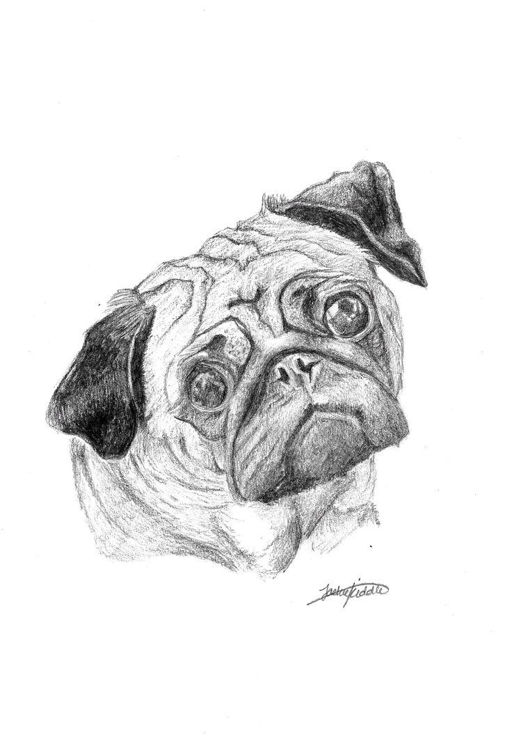 Pug $25  Print, art, drawing ww.petsbypencil.co.nz