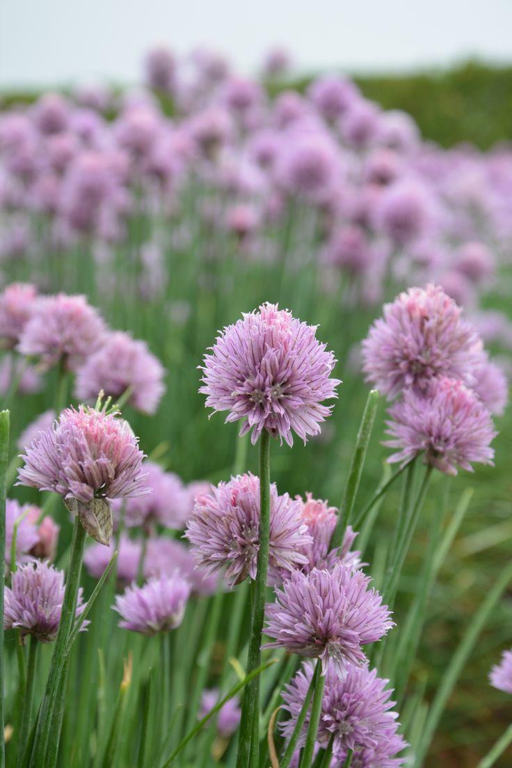 flowers from farm tomita, hokkaido