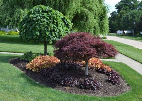 """Gardening expert Mike McGroarty of Mike's Backyard Nursery planted herbaceous perennials and trees of varying heights — lavender twist red bud tree and a laceleaf weeping Japanese red maple — to form this """"island"""" in his front yard."""
