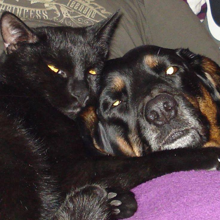 Hunde Foto: marina und gina & puma - zwei beste freunde gesucht und gefunden <3 Hier Dein Bild hochladen: http://ichliebehunde.com/hund-des-tages  #hund #hunde #hundebild #hundebilder #dog #dogs #dogfun  #dogpic #dogpictures