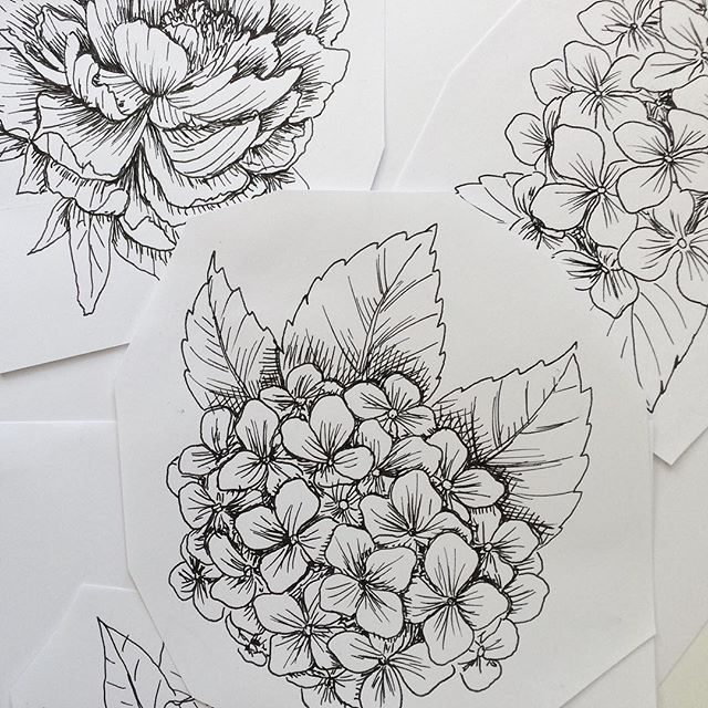 Nicole Sprekelmann On Instagram Details Of The Latest Illustrations Peonies And Hydrangeas Illustration Drawing Botanicalillustration Zeichnung Zeichne In 2020 With Images Hydrangea Tattoo Tattoos