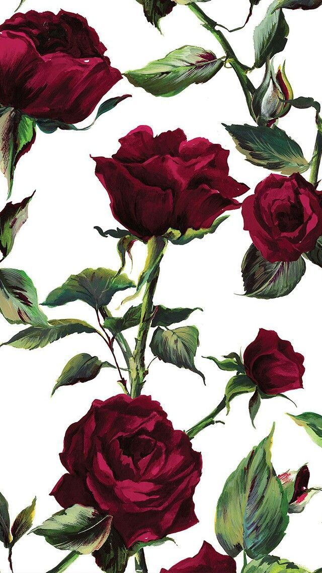 Red And Black Roses Wallpaper For Mobile Phone Free Wallpapers Black Roses Wallpaper Red Roses Wallpaper Rose Wallpaper