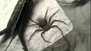 The Spider Who Couldn't Hide - I promise that even if you hate spiders as much as I do you will find this hilarious!