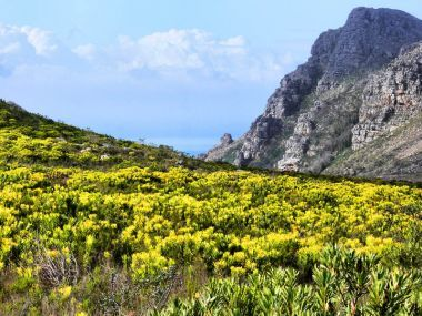 Silvermine Nature Reserve forms part of the Table Mountain National Park and encapsulates part of the Cape Peninsula mountain range.