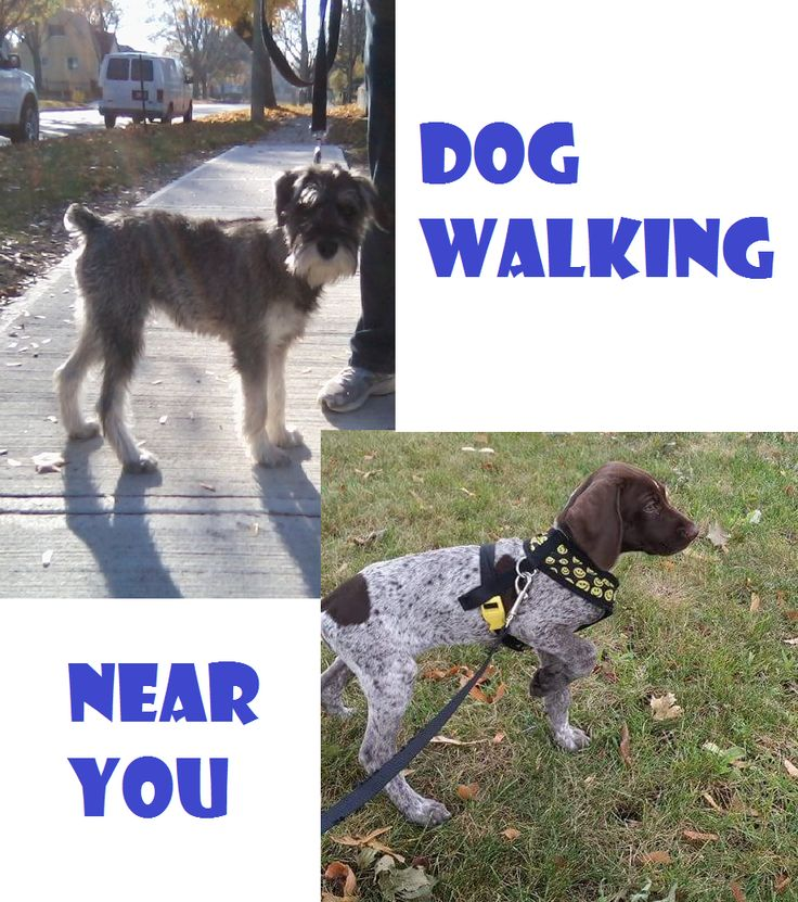 For Sale: DOG WALKING - PET VISITS - PET SITTING (CAT, DOG, BIRD, SMALL FURRY PETS) - Dog Walking Rates Private Walk...  $15 - 1/2 hr / $22 - 1 hr Group Walk...    $12 - 1/2 hr / $18 - 1 hr  Pet Service Rates Dog or cat visit:  1/2 hr  for $15  1 hr for $22 Puppy visit:  1/2 hr for $15  1 hr for $22 Pet visit, feeding and cleaning:  1/2 hr for $15  1 hr for $25  additional pet  for $5