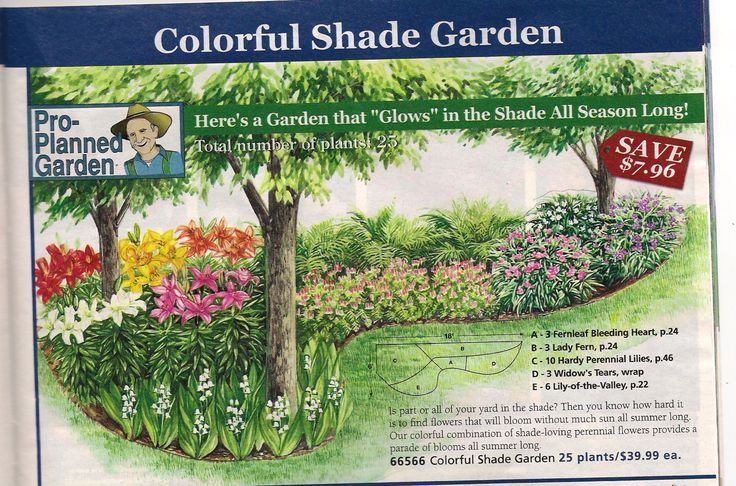 Shade Garden Plan From Michigan Bulb Co North Garden