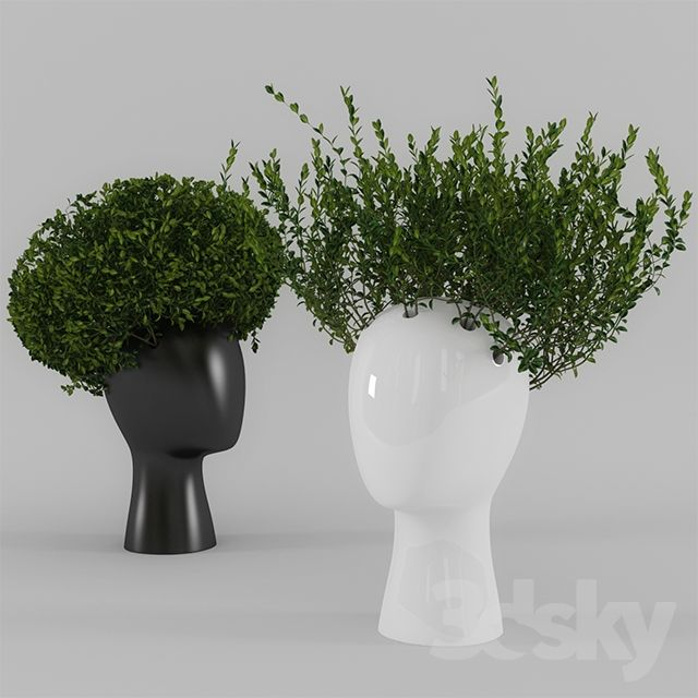 Wig vase with boxwood (part 1)