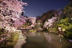 一万坪の東郷の杜の緑に囲まれて食事と花見が同時に楽しめる原宿 東郷記念館が昨年に引き続きお花見レストランをオープンさせるんだってぇ 窓一面に広がる日本庭園を眺めながら優雅な一時が過ごせますよ tags[東京都]