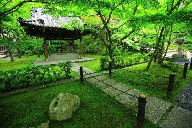京都永観堂の手水舎と美しい緑の苔ともみじ