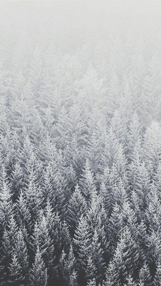 Snow Winter trees iPhone lock screen background wallpaper