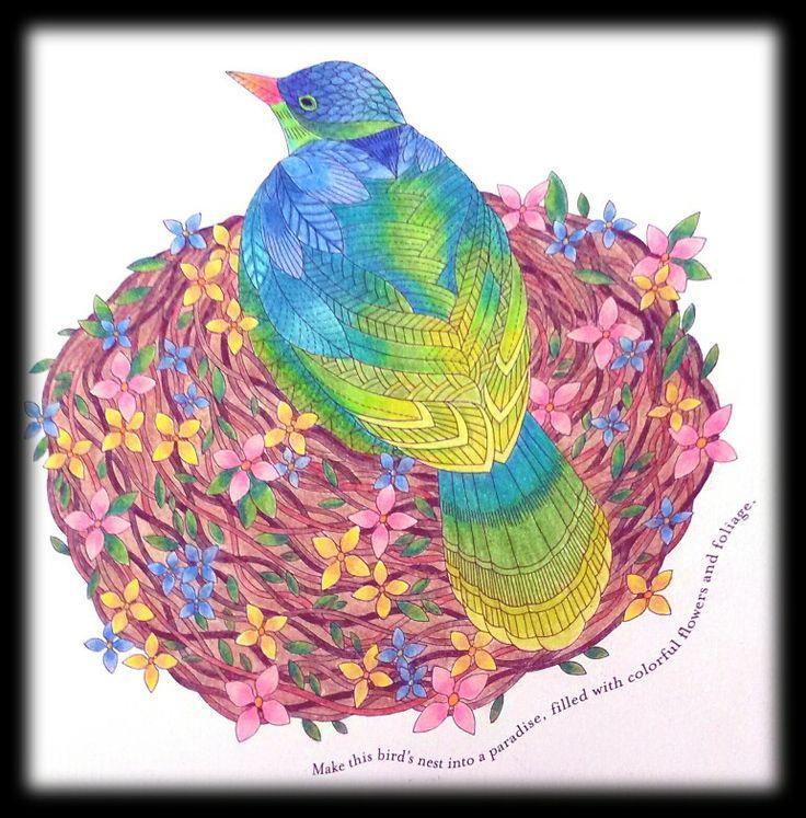 Millie Marotta Prismacolor Premier Derwent Colorsoft Pencils