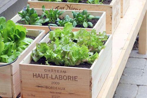 Spotted: Wine Box Container GardenGardens Ideas, Boxes Gardens, Wine Crates, Vegetables Gardens, Herbs Gardens, Small Spaces, Wine Boxes, Veggies Gardens, Vegetable Garden