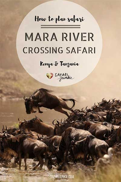 Tanzania: Wildebeest Migration Mara Crossing Safari Tips via @safarijunkie