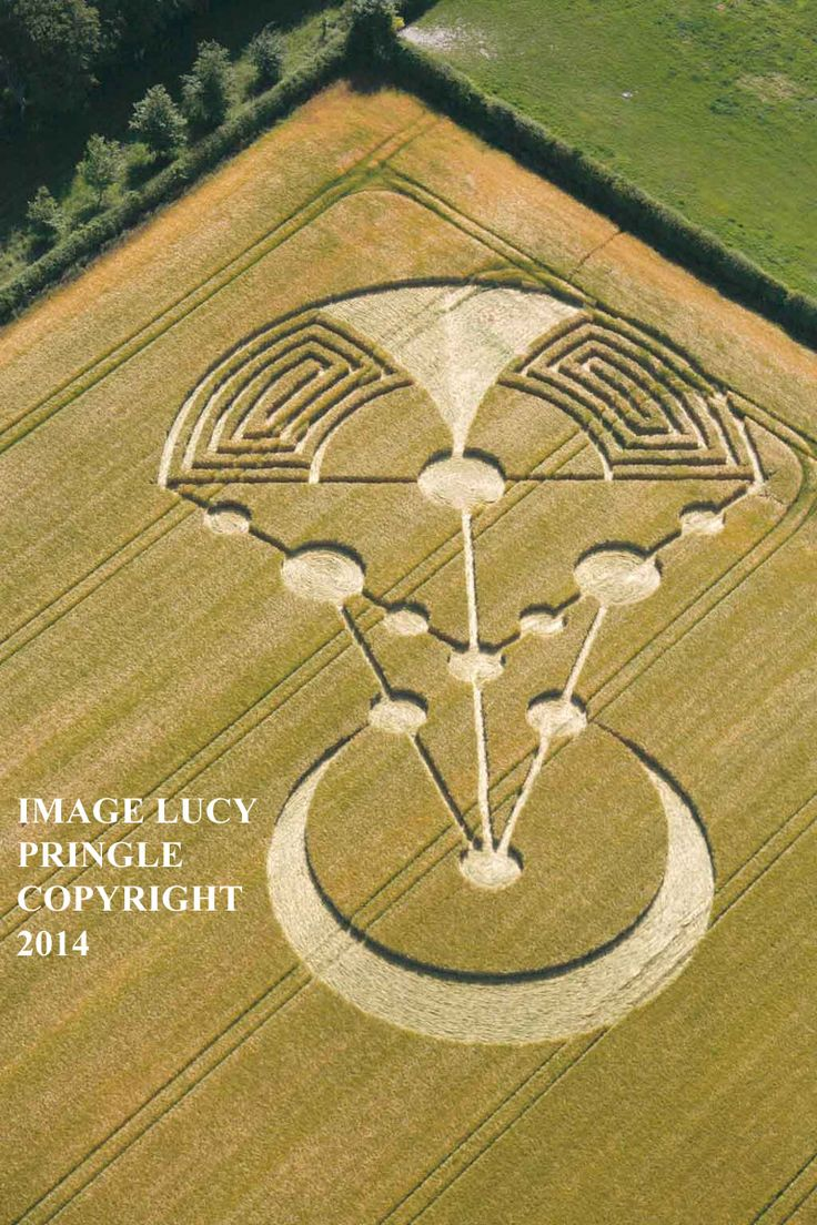 Crop Circle at Badbury Rings, nr Wimborne Minster, Dorset, United Kingdom. Report 17th June 2014