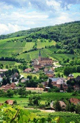 Route Des Vins In Alsace, France