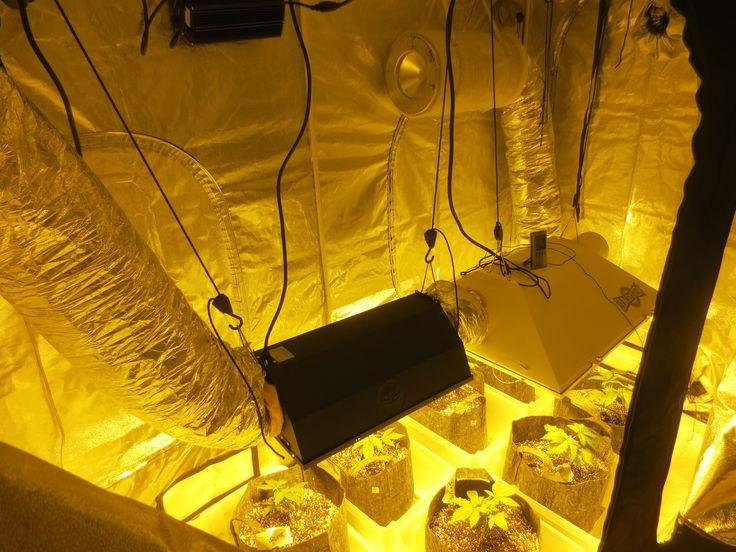 Crystal White Overview 2x 600 watt
