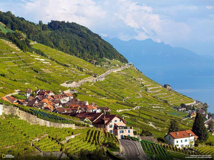 Vigne a Lavaux, Svizzera Fotografia di Susan Seubert