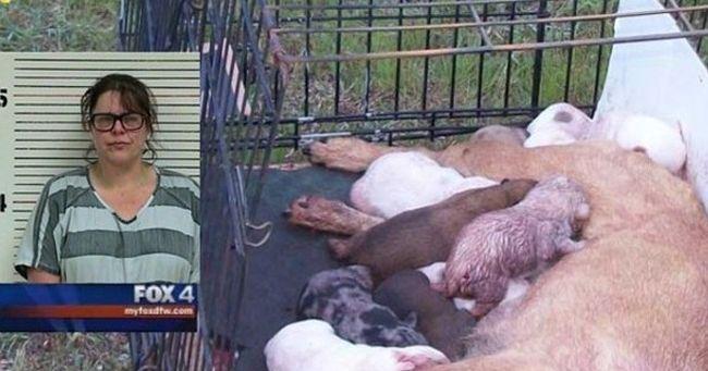 Spara al cane che ha partorito e la chiude in gabbia con i cuccioli vivi...