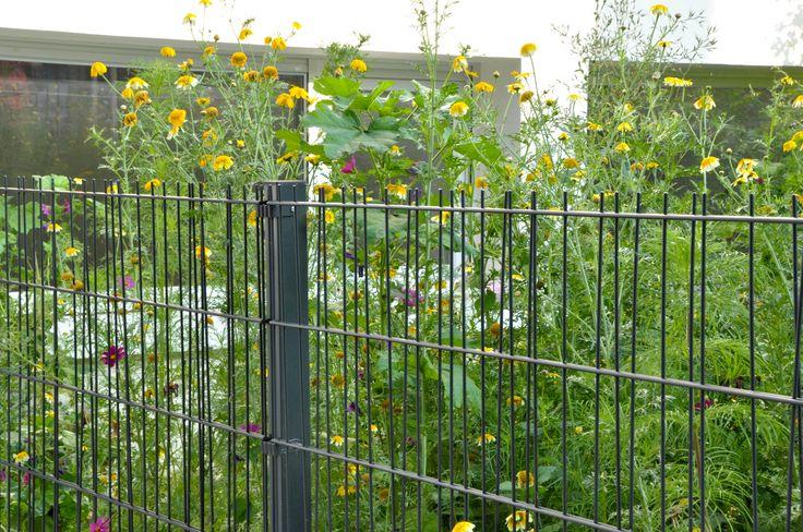 Des fils d'acier obliques pour accentuer le côté végétal de cette clôture grillagée pleine d'originalité. D'ailleurs, ce panneau de treillis s'appelle OOBAMBOO... tout est dit !