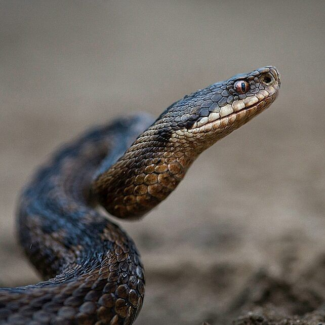 Pin By Beth Pacheco On Snakes Snake Instagram