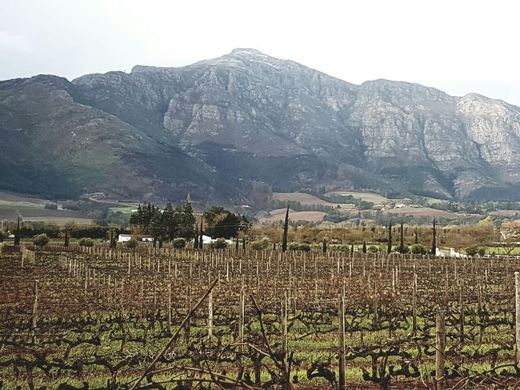 The view over our vineyards. The first snow in Franschhoek!