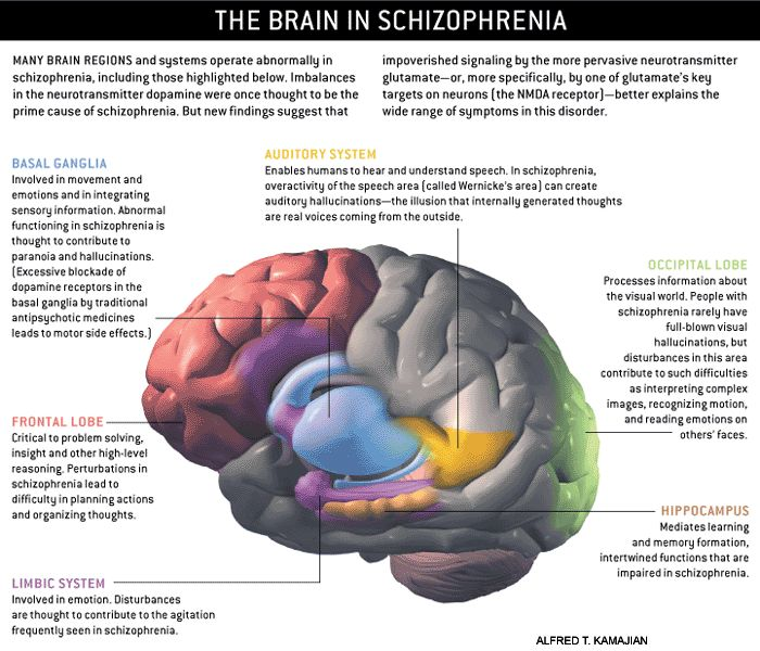 Schizophrenia is a mental disorder that significantly affects cognition and usually contributes to chronic problems with behavior and emotion. Along with a breakdown of thought processes, the disorder is also characterized by poor emotional responsiveness, paranoia, auditory hallucinations and delusions.