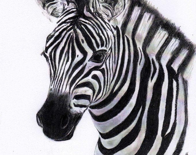 Estampado de cebra 8 x 10 carbón y negro que cebra Zebra arte impresión Zebra cebra dibujo del cuadro de la pared