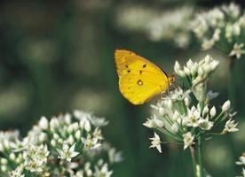 Experimentos simples para la escuela primaria sobre el ciclo de vida de las mariposas
