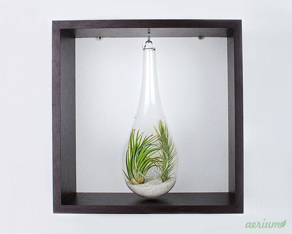 Framed Airplant Terrarium  Decorate your walls with this minimalist framed terrarium or just let it live on your desk. Available with white frame, also. https://www.etsy.com/shop/Aerium
