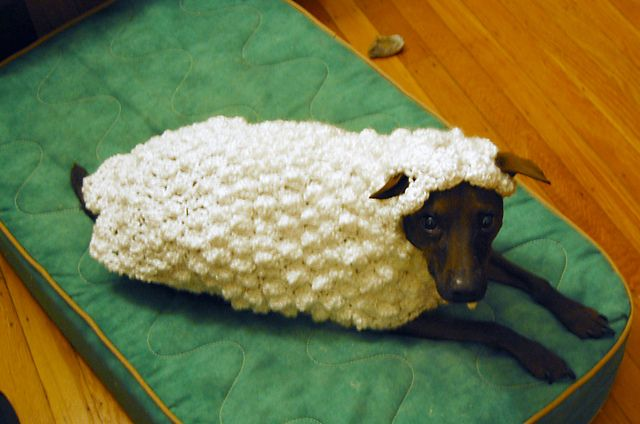 "Ravelry: NovelTea's A Real Sheep Dog  Crochet pattern for dog sweater!    Bella says:  ""Don't do it!!!"""