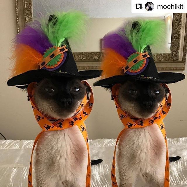 Our Halloween Cat Hat is twice as fun. Dogs love it too. It also makes a fun centerpiece if your pet is allergic to hats. StarkRavingCat style