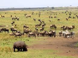 Un ecosistema es aquella comunidad que conforman una serie de seres vivos que interactúan entre sí y el medio natural en el que viven y se despliegan de tal forma, en tanto, el ecosistema terrestre se caracteriza por ser aquel que se encuentra en la superficie terrestre. O sea, el ecosistema terrestre se ubica en […]