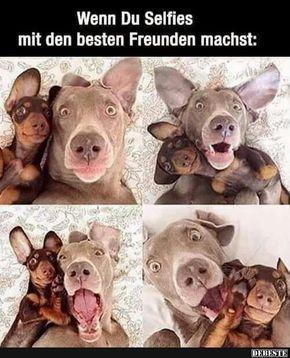 Quando você faz selfies com seus melhores amigos   – Lustige Tiere Hund