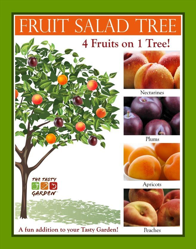 Grow a fruit salad tree  (Yes, these are real. They are trees that grow multiple varieties of a single kind of fruit like all apples, stone fruits or citruses.)