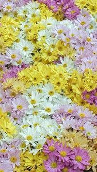 Kwiatowy dywan w kolorach pastelowych