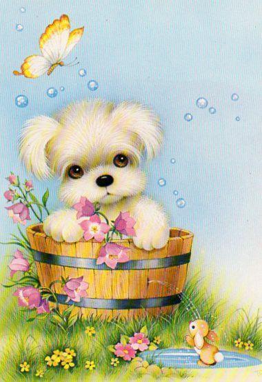 bathing.quenalbertini: Little dog's bathing